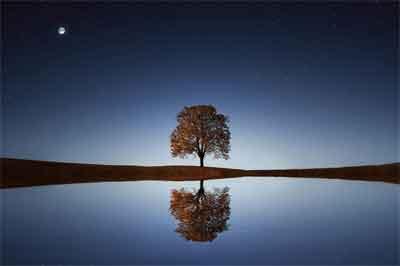 生命の樹コンサルテーション